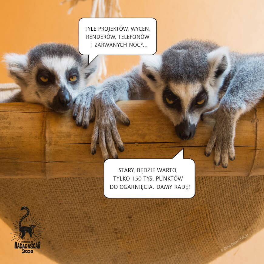 Lemury zapraszają na egzoyczyną wyprawę!